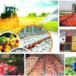محصولات کشاورزی پردرآمد